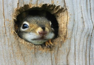 Anxious Squirrel 889x622